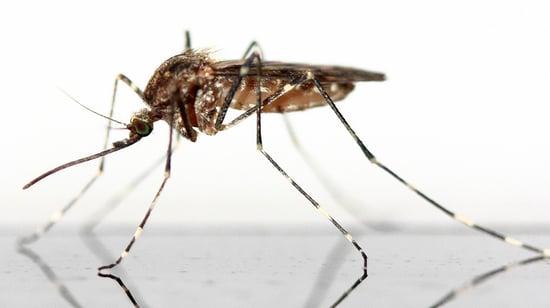 mosquito-closeup_1080x606